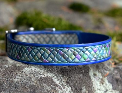 Rainbow Fish Dog Collar