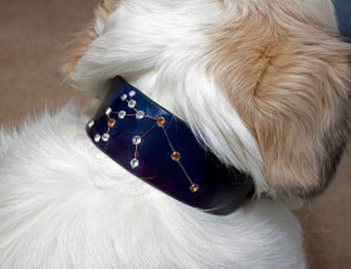Customer Constellation Dog Collar